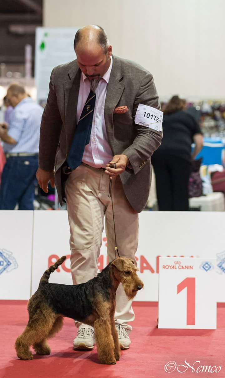 World dog show Milano 2015