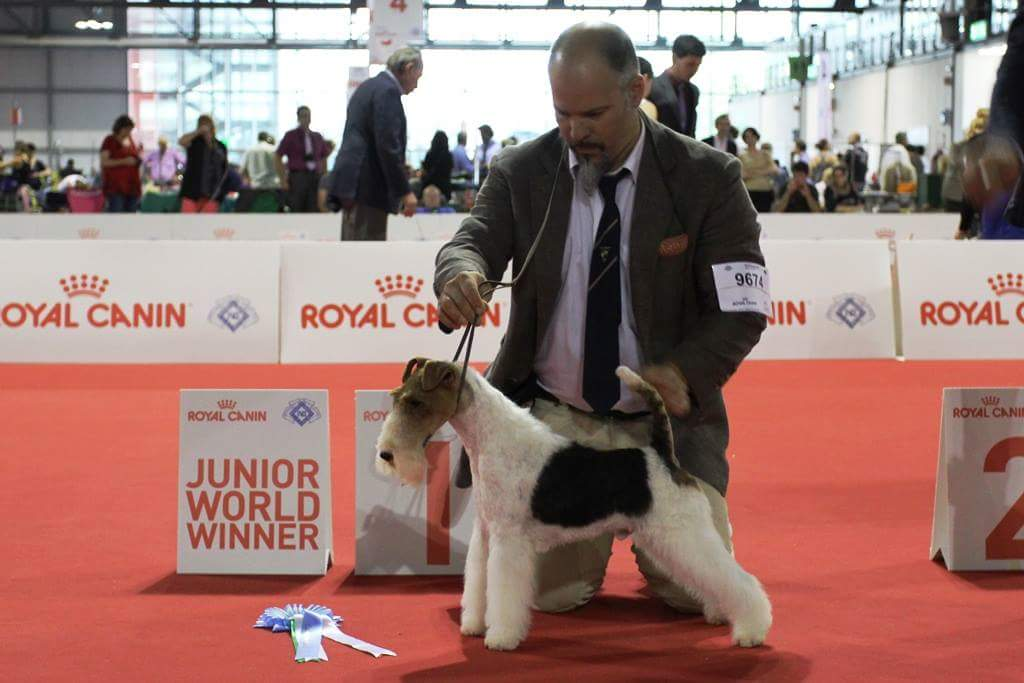 WorlddogshowMilano2015